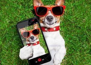 Ljubitelji pasme Jack Russell Terrier