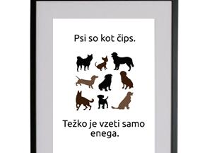 Mr. Pet